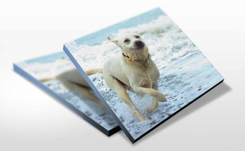 large-format-print-stoke-on-trent-staffordshire-canvas-print-animal-portrait
